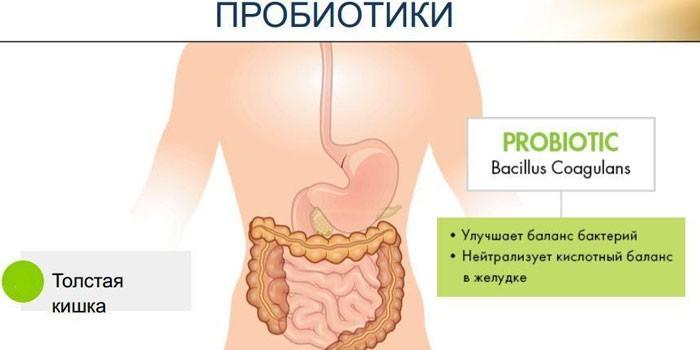 Пробиотики после антибиотиков взрослым Все об антибиотиках